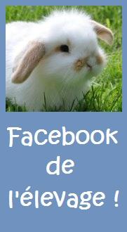 folie`chons elevage lapins nains bélier perche facebook