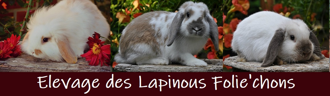 elevage des lapinous folie`chons lapins béliers nains